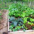 Starting your very own vegetable garden